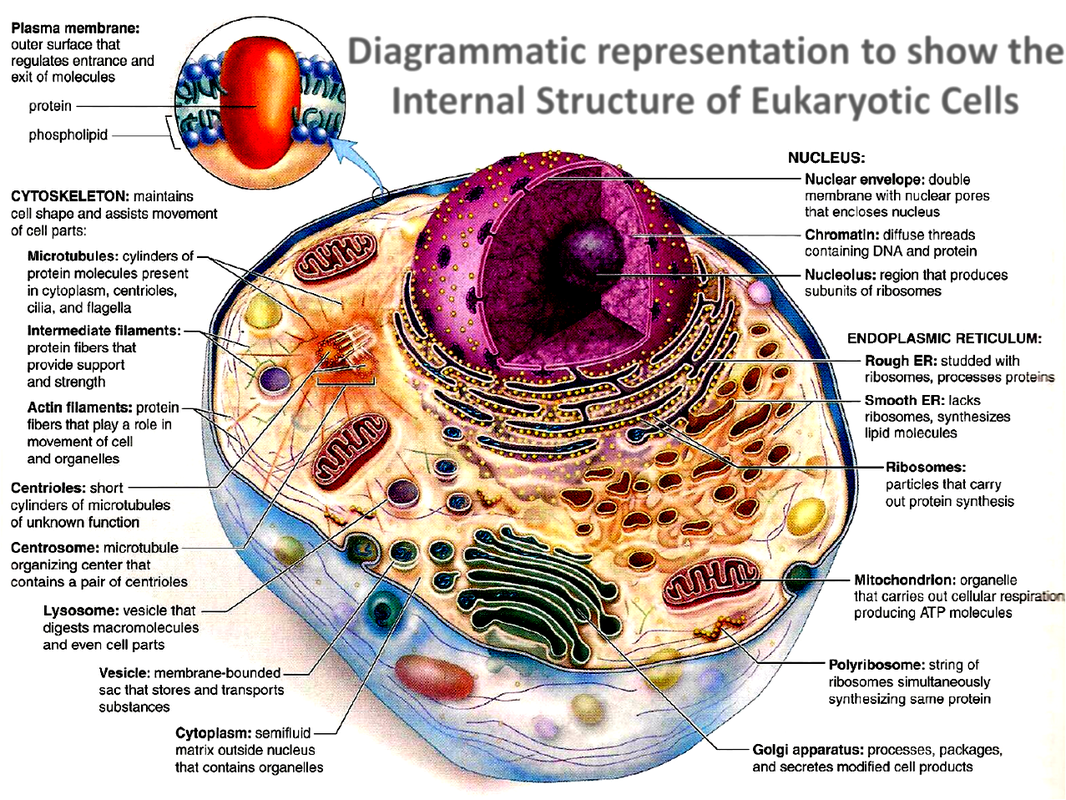 Unit One  Cell And Cell Division